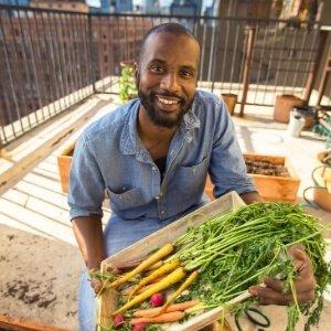 Cosecha de hortalizas en el huerto urbano