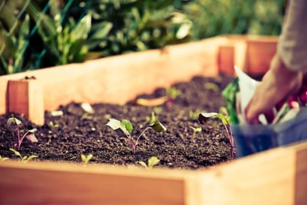 bancal de madera con sustrato en el interior y plantas creciendo